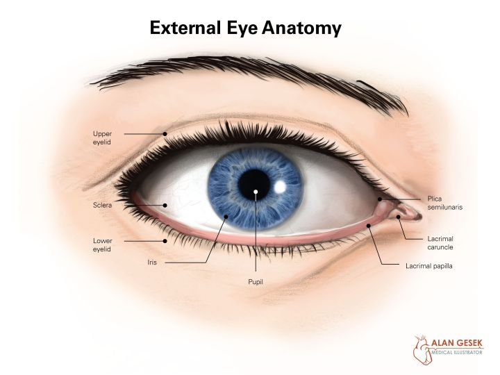 external-anatomy-of-the-eye-external-anatomy-of-the-eye.jpg